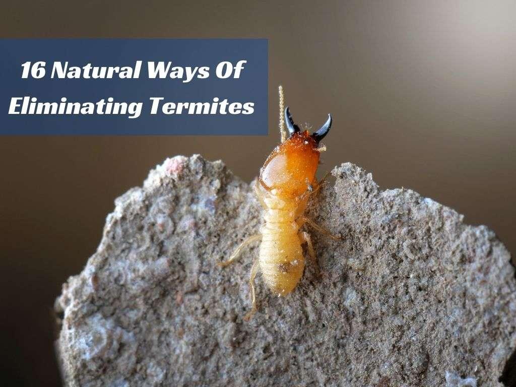 16 Natural Ways Of Eliminating Termites