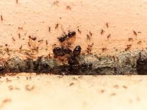 21 Natural Ways to Prevent Ants from Entering Your House
