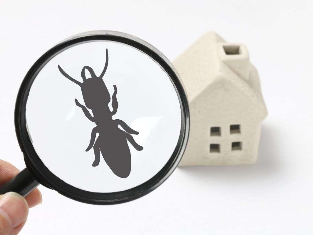 Do Termites Bite and Harm Humans?