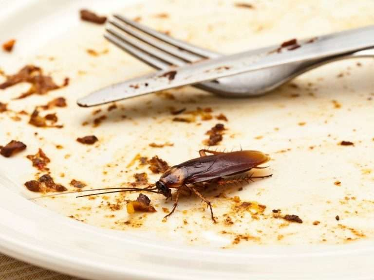 NYC Cockroach Control and in NJ, CT, and Long Island